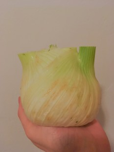 Holding fennel in my hand