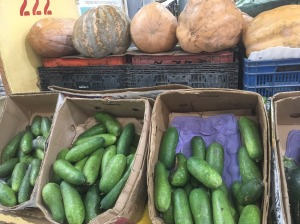 small and large squash
