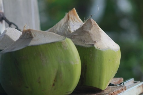 Green coconuts with the tops peeled off